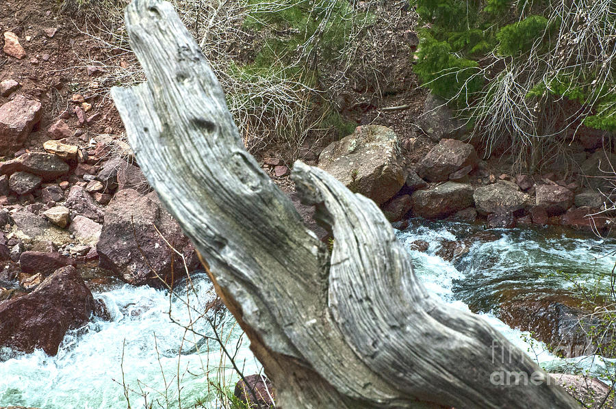 Driftwood Design by Ruth H Curtis