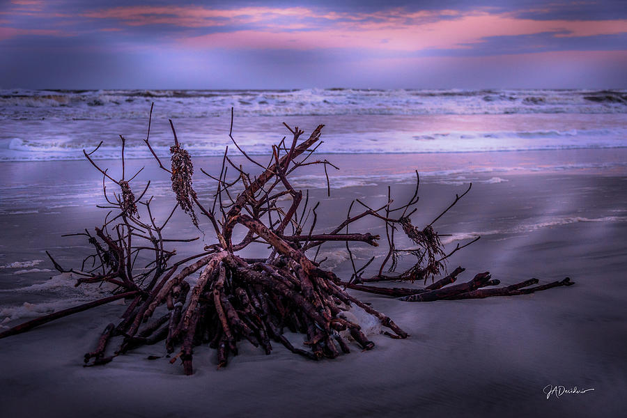 Driftwood by Joedes Photography