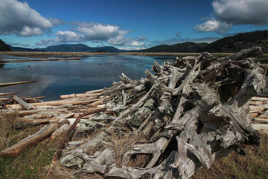 Driftwood on a Beach in the San Juan Islands, Washington by Pacific Northwest Sailing