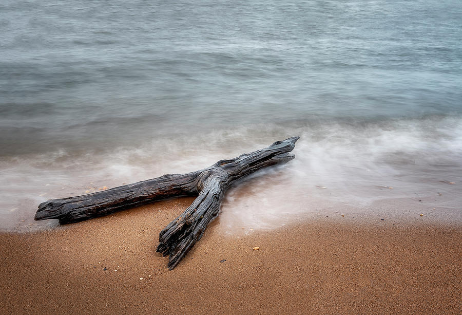 Driftwood by Ryan Wyckoff