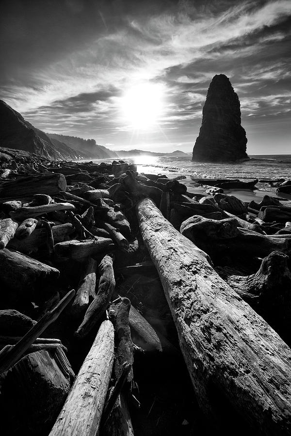 Beach Photograph - Driftwood Sun 1 Silver by Thomas Haney