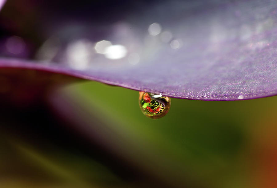 Drop Of Water Photograph by Pablo Reinsch Photography