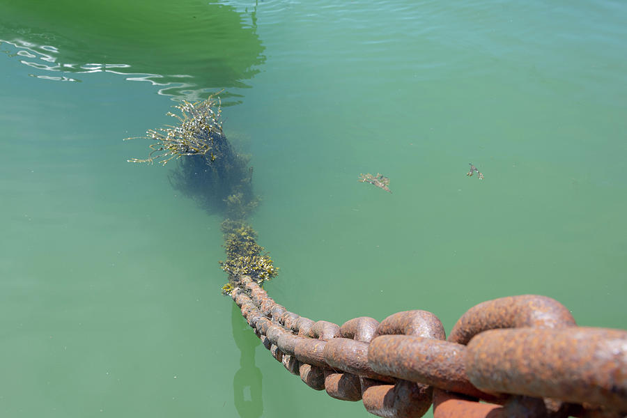 Chain Photograph - Drop The Anchor by Steev Stamford