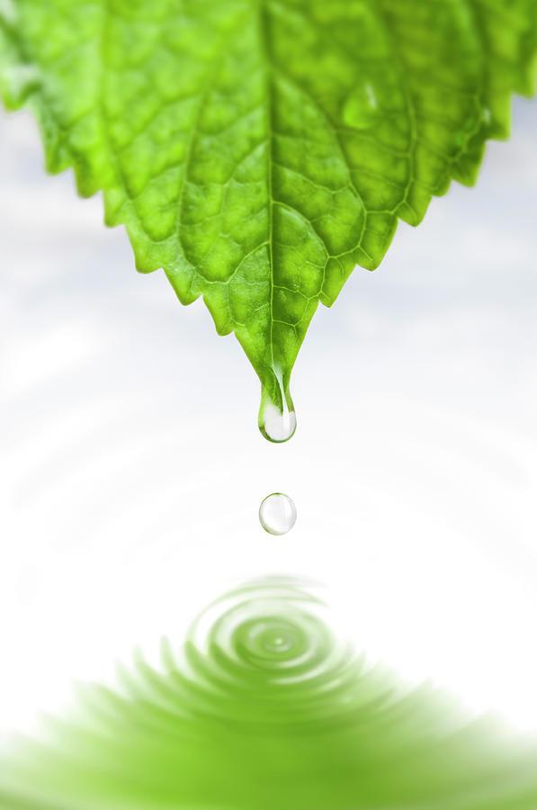 Drop Photograph by Ugurhan
