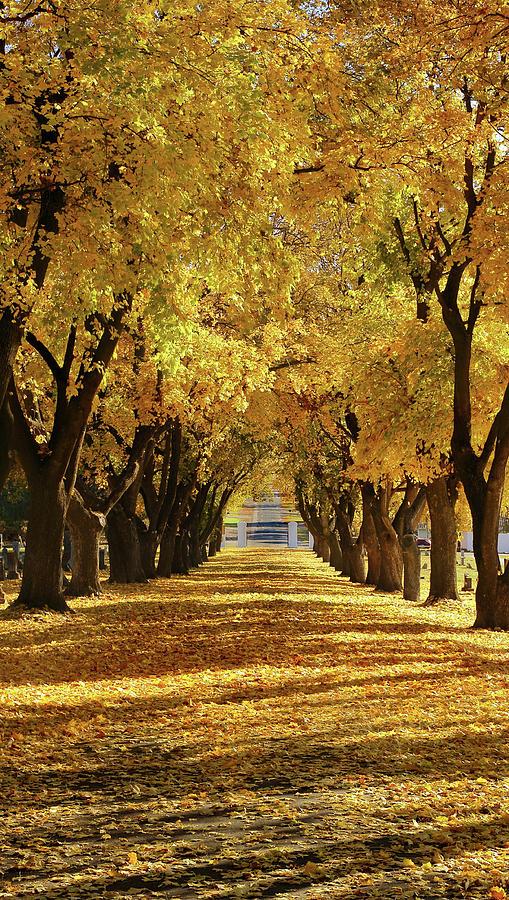 Dropping Like Leaves by David Andersen