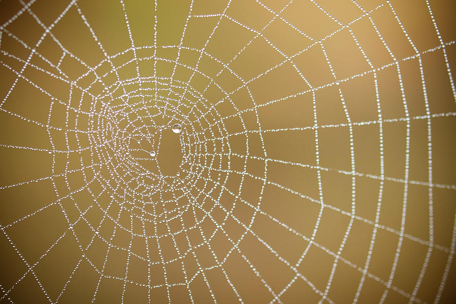 Drops Of Dew In Spiders Web Photograph by Sylvain Masson