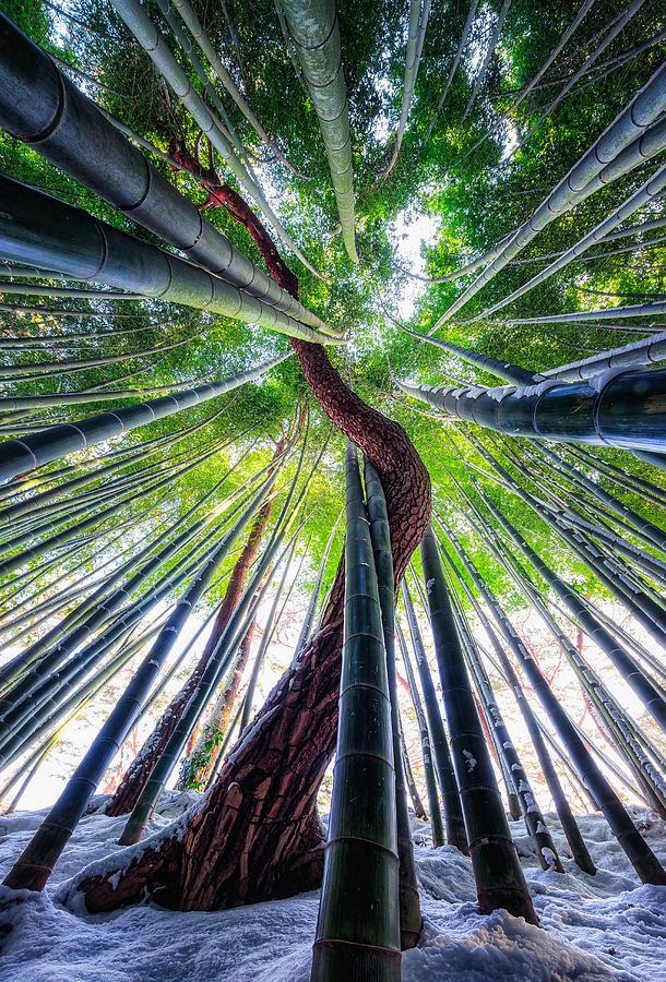 Pine Photograph - Drunken Tree by Tiger Seo