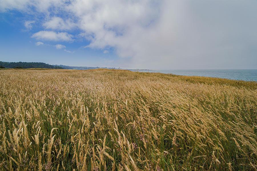 Dry Coastal Landscape by Jonathan Hansen