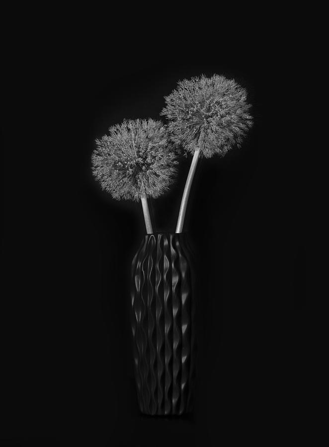 Vase Photograph - Dry Giant Allium by Lydia Jacobs