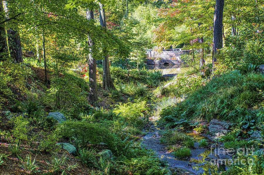Nature Photograph - Dry Stream by James Foshee