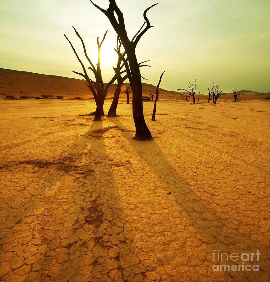 Heat Photograph - Dry Trees In Namib Desert by Galyna Andrushko