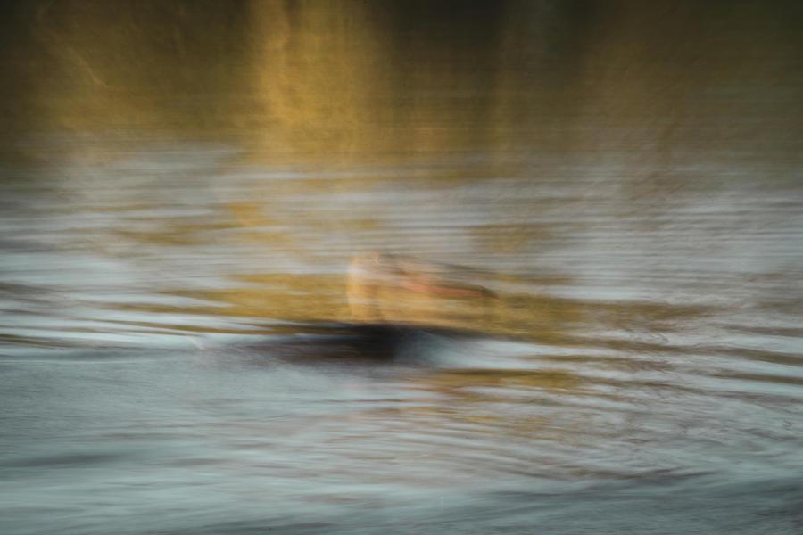 Duck by Dalibor Hanzal
