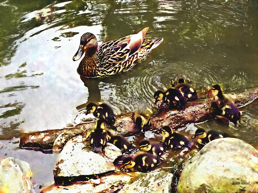 Duck Family by Susan Savad