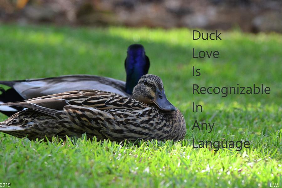 Duck Love by Lisa Wooten
