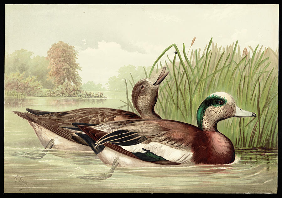 Ducks by the Lake by Carlos Diaz