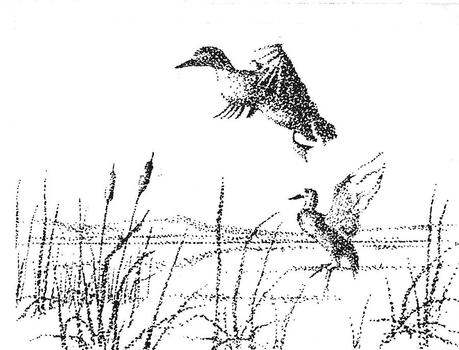 Ducks Drawing - Ducks by Kevin Heaney