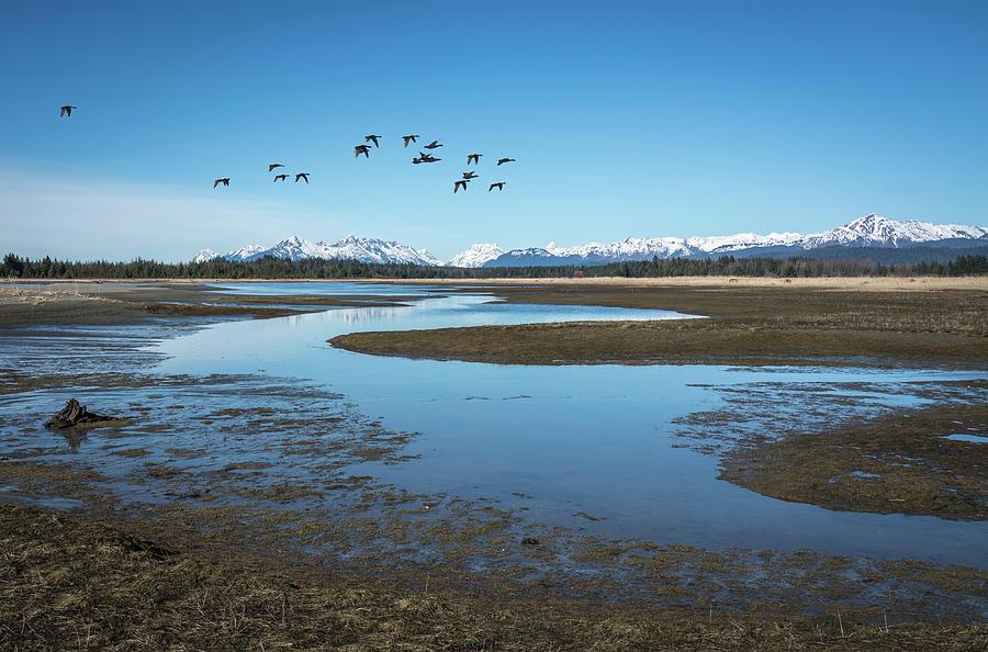 Ducks near the Salmon River by Michele Cornelius