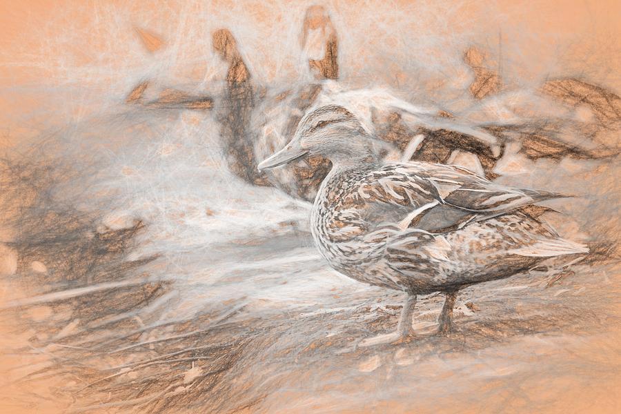 Ducks On Shore Da Vinci Photograph