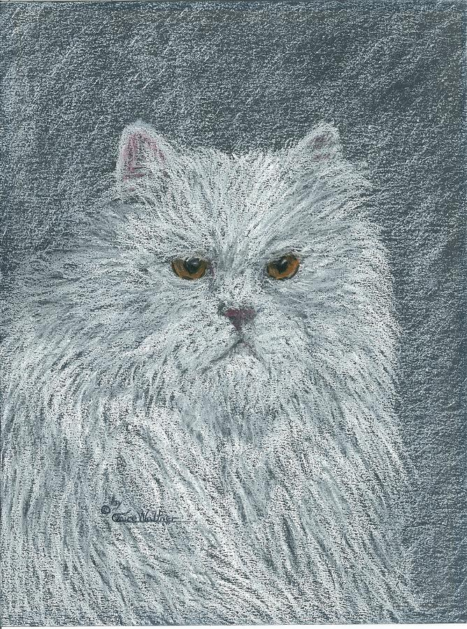 Duke the Persian Cat by Claire Decker