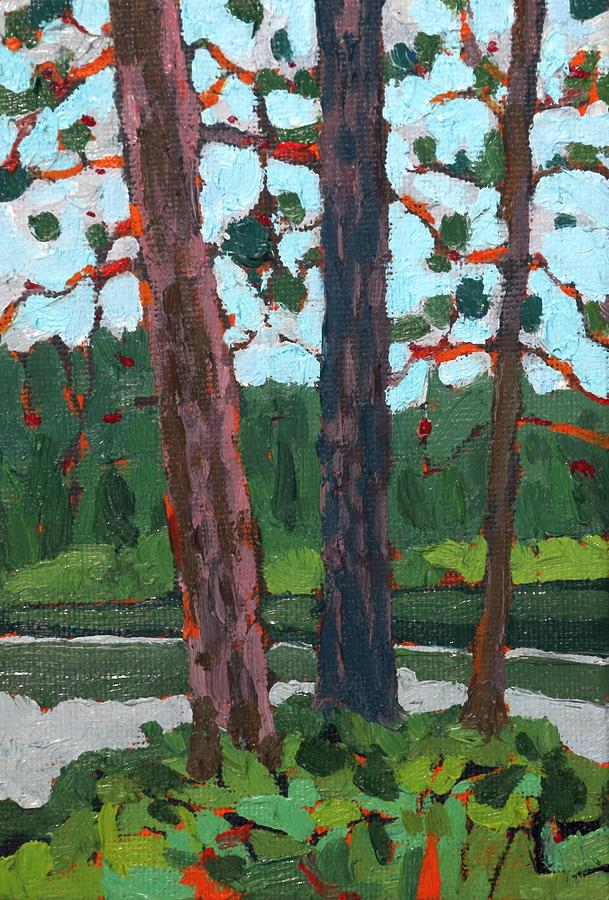 Dumoine White and Red Pines by Phil Chadwick