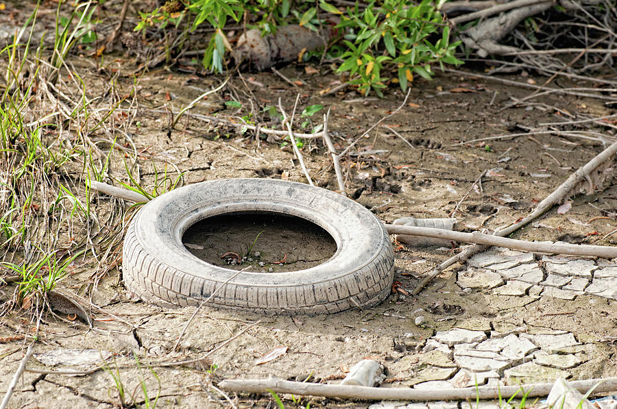Used Photograph - Dumped Tyre by Microgen Images/science Photo Library