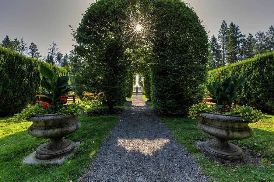 Duncan Garden Sun Burst by Mark Kiver