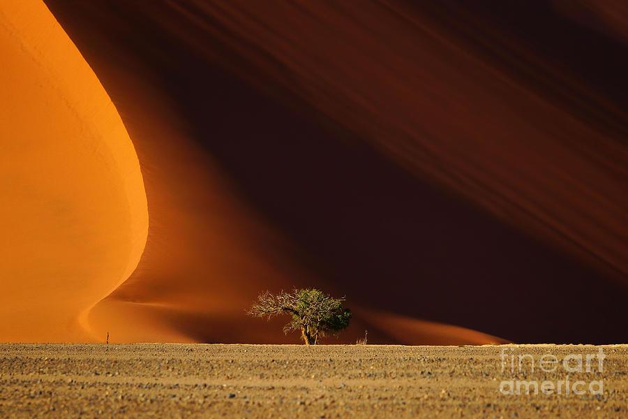 Africa Photograph - Dune 40 And Tree Sossusvlei Namib by Efimova Anna
