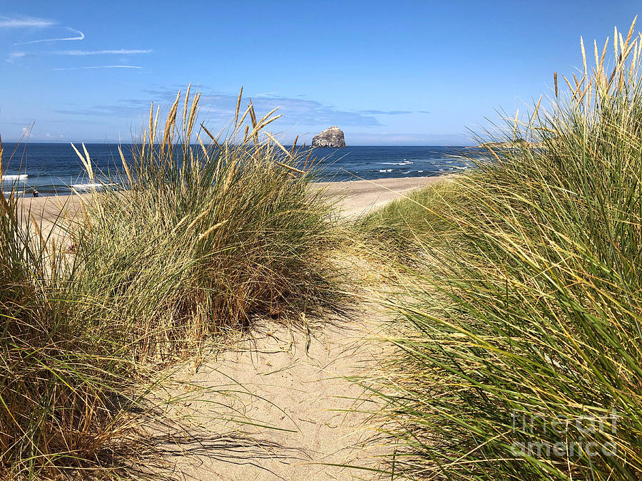Dune Beach Path by Jeanette French