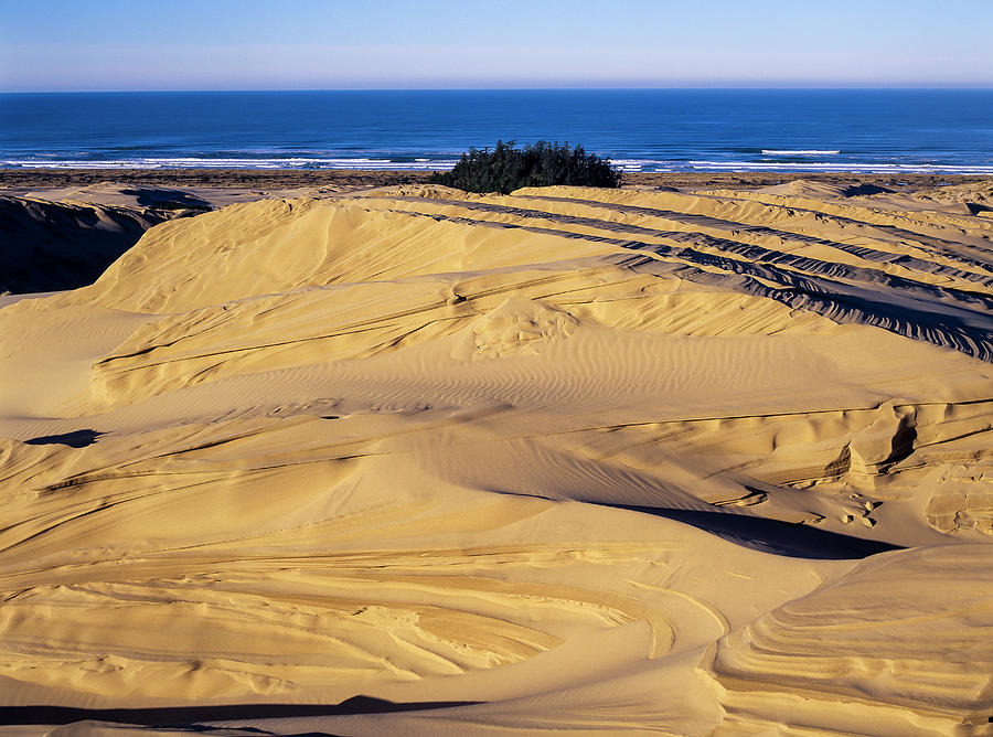 Dune Erosion by Robert Potts