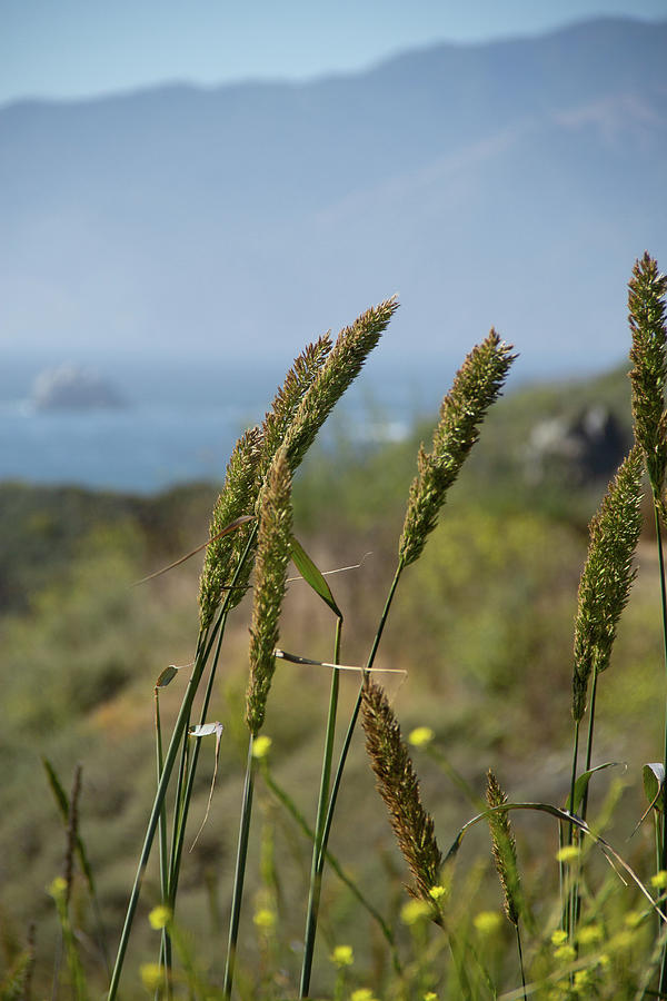 Dune Grass by Marie Leslie