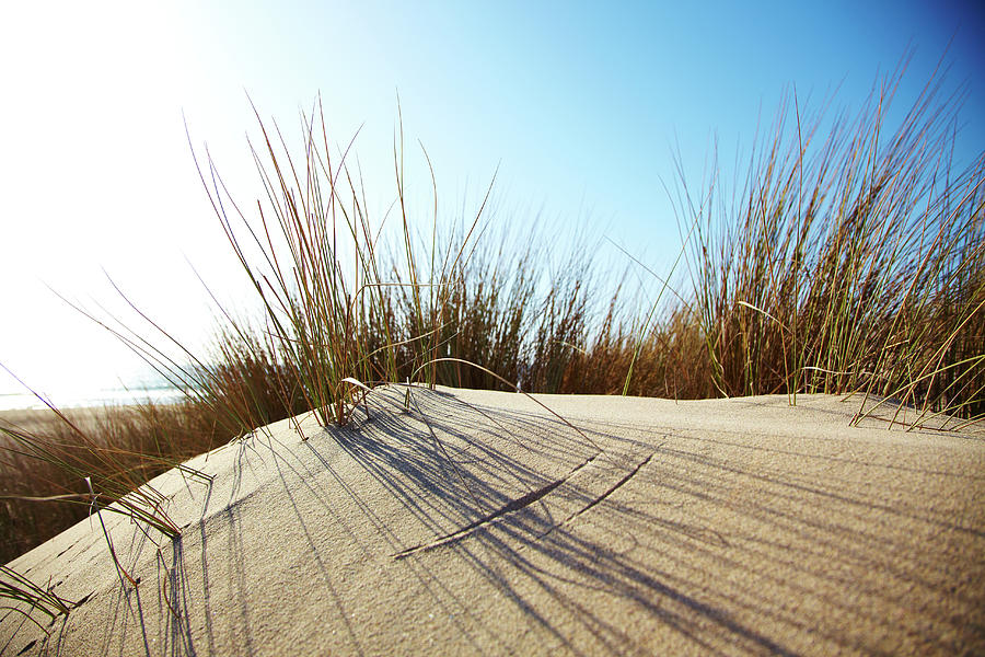 Dune Grass On A Sand Dune At The Beach Photograph by Thomas Northcut