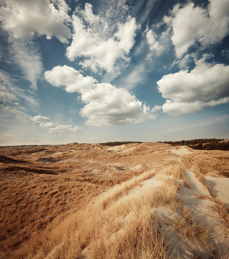 Dune Landscape Photograph by Ppampicture