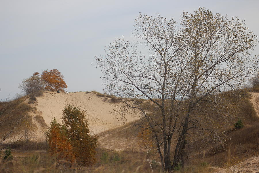 Kohler-andrae State Park Photograph - Dunes Along Lake Michigan by Callen Harty