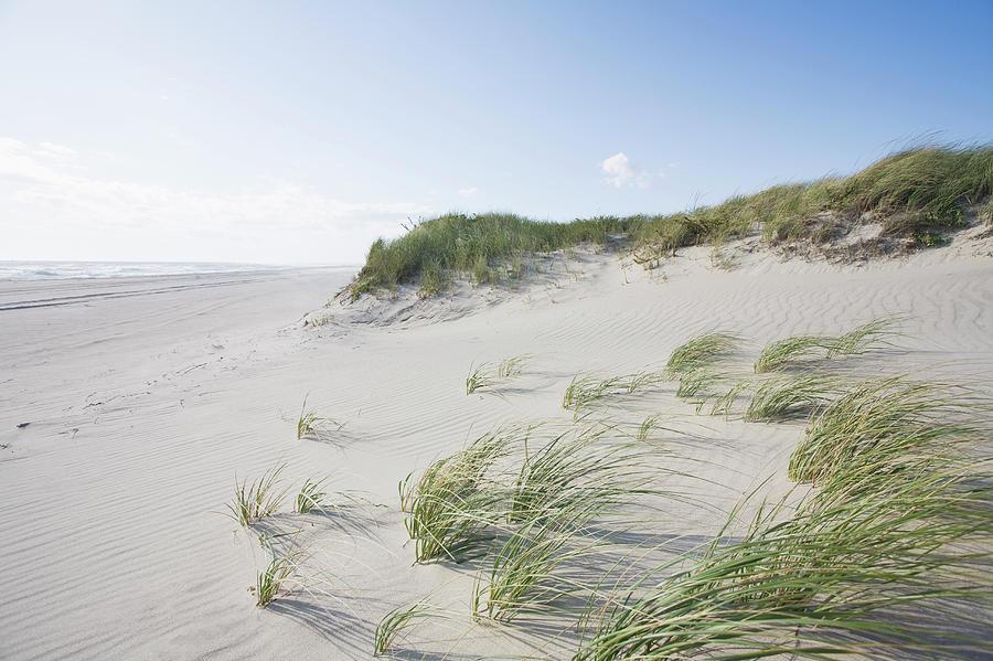 Dunes And Beach, Nantucket Island Photograph by Nine Ok