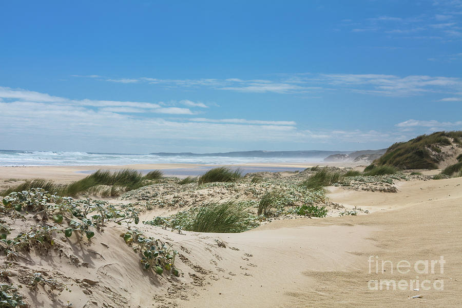 Dunes at Yeagarup Beach, Western Australia by Elaine Teague