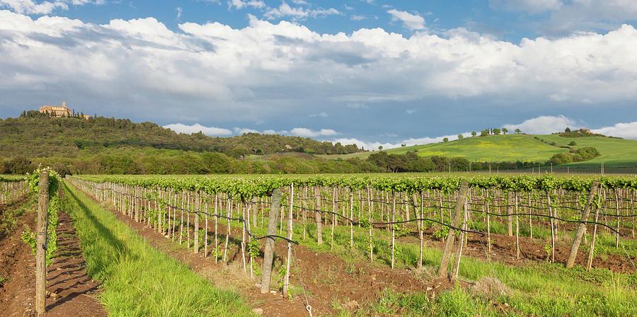 Dusk At Tuscany Vineyards Photograph by Saro17