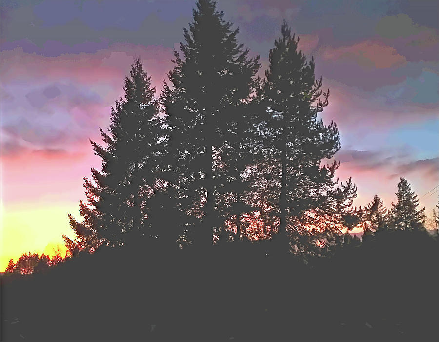 Dusk in the Pines by Robert Bissett