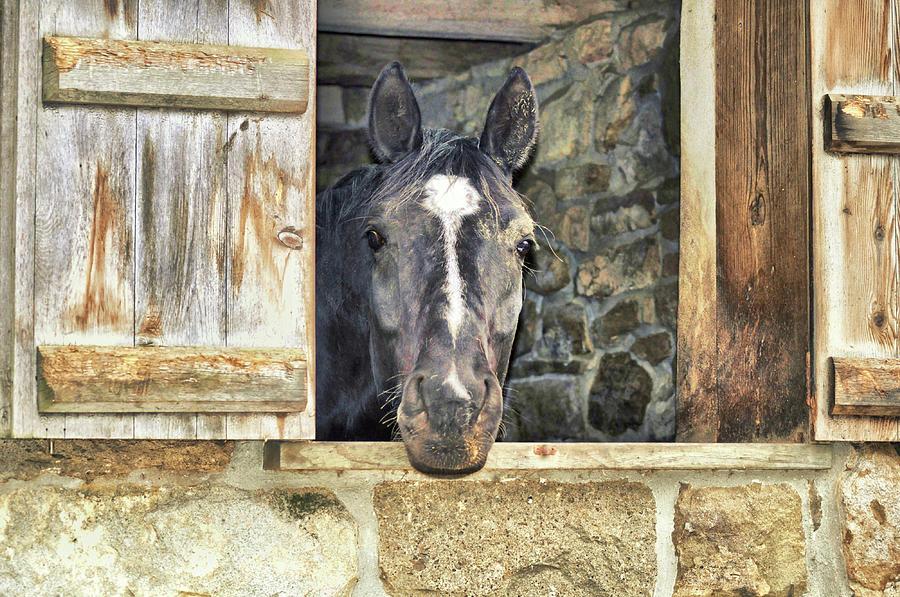 Dutch Door Farm Photograph