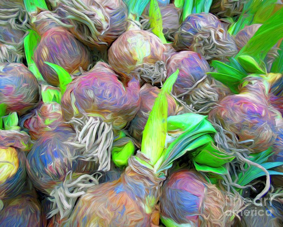 Dutch Tulip Bulbs by Susan Lafleur