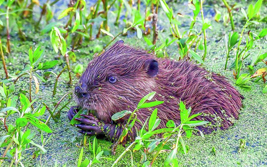 Eager Beaver by Marcy Wielfaert