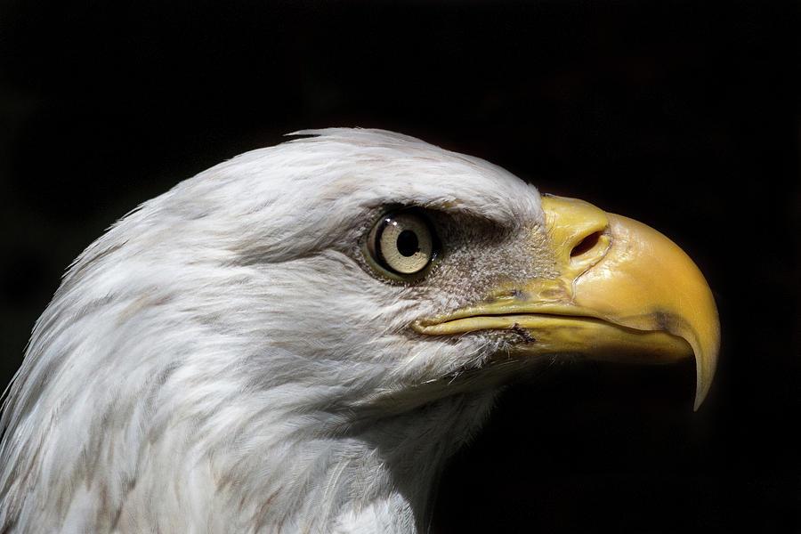 Eagle eye by Kerri Cunningham