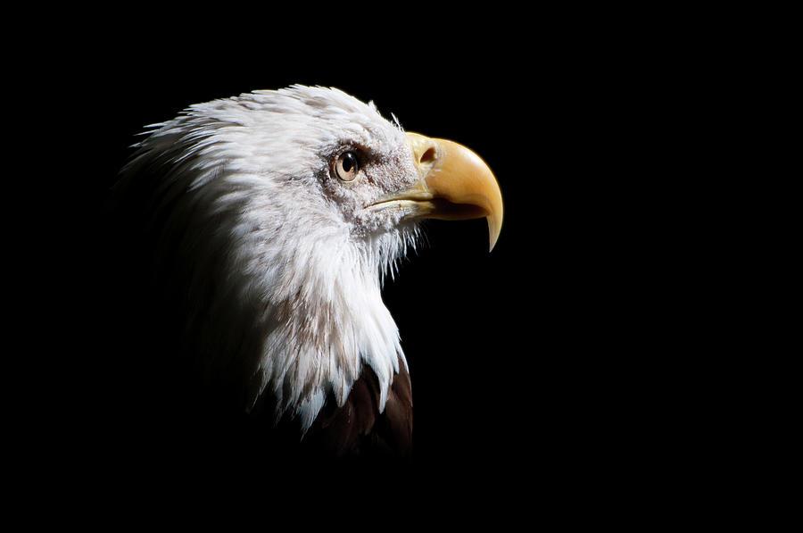 Eagle Photograph by Felipe Buccianti