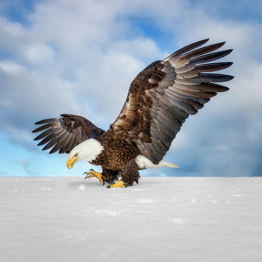 Eagle Grab by Scott Bourne