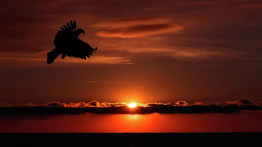 Eagle In A Red Sky by Scott Bourne