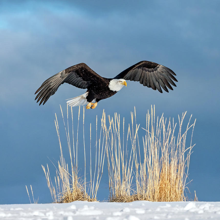 Eagle In The Weeds by Scott Bourne