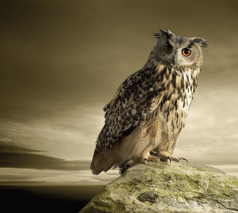 Eagle Owl Standing Full Length On A Rock Photograph by Digital Zoo