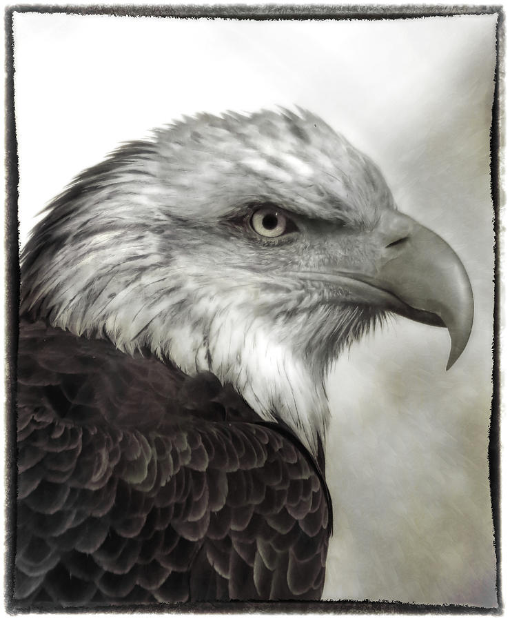 Eagle Protrait by ELAINE MALOTT