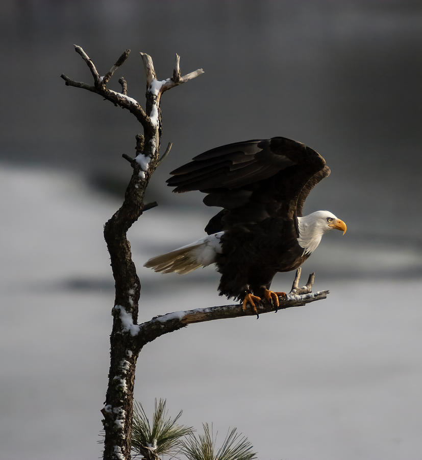 Eagle Take Off by Mark Kiver