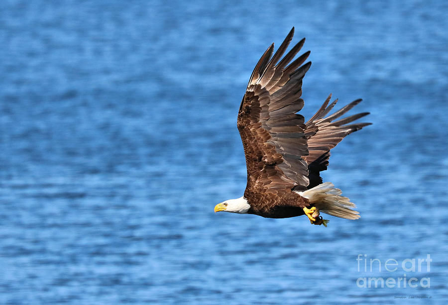 Eagle Take Out  by Sandra Huston