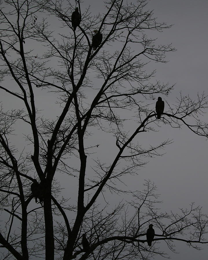 Eagle Tree at Dusk by Arvin Miner